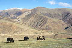 Moutnain scenery. The landscape of Yela Mountain in Tibet, China Stock Image