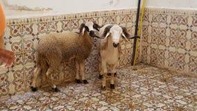 mouton foto de archivo