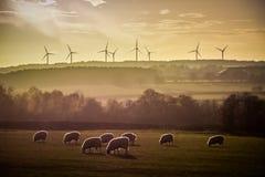 Moutons éclairés à contre-jour par horizon de turbines de ferme de vent au coucher du soleil Images libres de droits