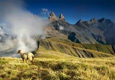 Moutons au-dessous de trois d'Arves d'Aiguilles de crêtes dans les Alpes français, Frances. Photographie stock libre de droits