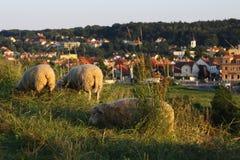Moutons au-dessus de la ville Photo libre de droits