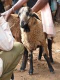 Moutons au marché hebdomadaire images stock