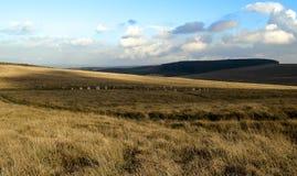 Moutons castrés gris, dartmoor Devon de massif de roche de Sittaford Image libre de droits