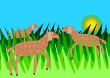 Moutons dans l'herbe Images stock