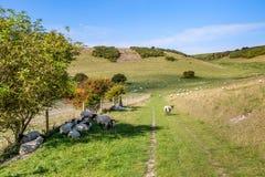 Moutons dans la campagne du Sussex images stock
