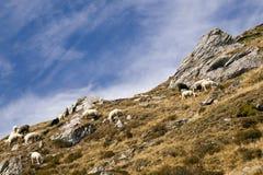 Moutons dans la montagne Images libres de droits