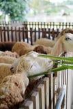 Moutons de alimentation Image stock