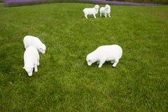 Moutons de bande dessinée Photo stock