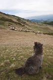 Moutons de dispositif protecteur Photographie stock libre de droits