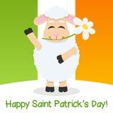 Moutons de jour de St Patrick s et drapeau irlandais Photos stock