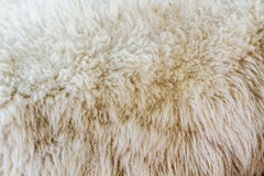Moutons de laine Photographie stock