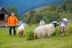moutons de montagne photos stock