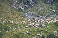moutons de montagne carpathienne en été - effet de film de vintage Photographie stock libre de droits