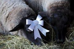 Moutons de Noël Photo libre de droits