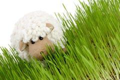 moutons de Pâques Photographie stock libre de droits