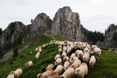 Moutons descendant la montagne Photographie stock