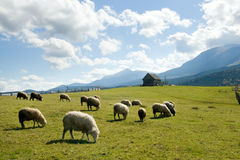 Moutons en montagne Photo stock