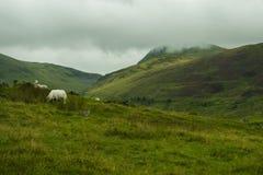 Moutons en montagnes photo libre de droits