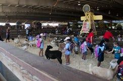 Moutons et chèvres à l'objet exposé de parc animalier chez le comté de Los Angeles juste dans Pomone image libre de droits