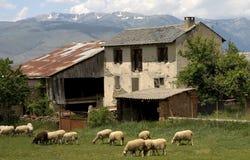 Moutons et ferme Photographie stock
