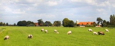 Moutons et fermes dans l'horizontal hollandais photo stock