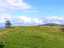 Moutons et Glassland Photographie stock