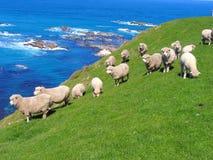 Moutons et Glassland Images libres de droits