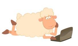 Moutons et ordinateur portatif de dessin animé Photographie stock
