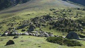 Moutons frôlant sur la colline banque de vidéos