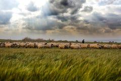 Moutons frôlant dans le domaine Photo stock