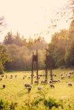 Moutons frôlant dans le domaine Image stock