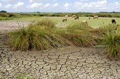 Moutons frôlant sur l'hirondelle tombée sèche de nature. Image stock