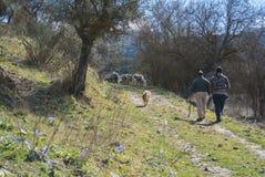 Moutons frôlant une journée de printemps Image libre de droits