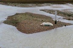 Moutons morts par la rivière, gravier, par l'indicateur de niveau de l'eau Photos stock