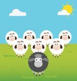 Moutons noirs avec la situation de direction Photographie stock libre de droits