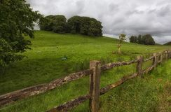Moutons peints de Gallois Photo stock