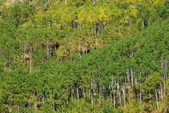 Moutons River Valley en automne Images libres de droits