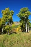 Moutons River Valley en automne Photographie stock