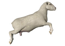 Moutons sautants Photos stock