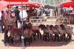 Moutons sheered au marché de bétail image libre de droits