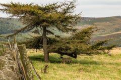 Moutons sous l'arbre Image stock