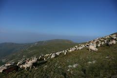 Moutons sur des crêtes de montagne Images libres de droits