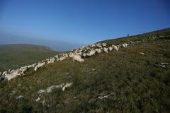 Moutons sur des crêtes de montagne Images stock