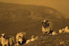 Moutons sur des crêtes de montagne Photographie stock