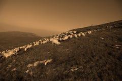 Moutons sur des crêtes de montagne Photos stock