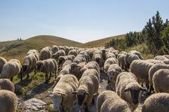 Moutons sur des montagnes Photos stock