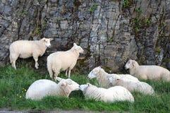 Moutons sur l'herbe images stock