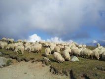 Moutons sur l'herbe verte et le ciel bleu Photo libre de droits
