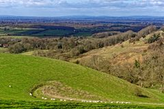 Moutons sur la colline de Newtimber image stock