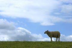 Moutons sur la digue Images libres de droits